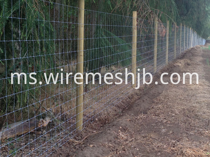 Woven Wire Sheep Fence