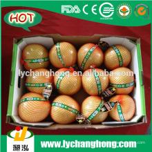 Pomelo / honig pomelo / frische pomelo / pomelo frucht