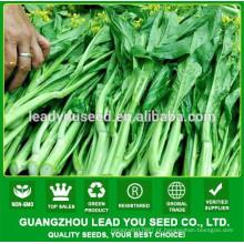 Sementes de repolho de florescência vagetable de NCS01 Caixi China fornecedor