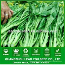 NCS01 Caixi Китай цветения vagetable поставщик семян капусты