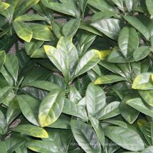 Garten dekorativer künstlicher Efeuweinblatt spaltete Bambuszaunabdeckung