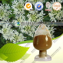 Natural Dahurian Angelica Root Extract 10: 1
