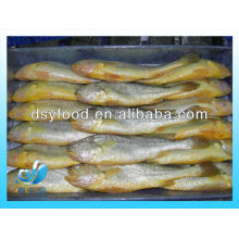 FROZEN LARGE YELLOW CROAKER FISH(SEAFOOD)