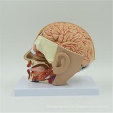 Venta caliente pequeños cerebros de plástico