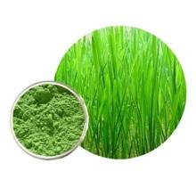 High Quality Barly Grass Powder