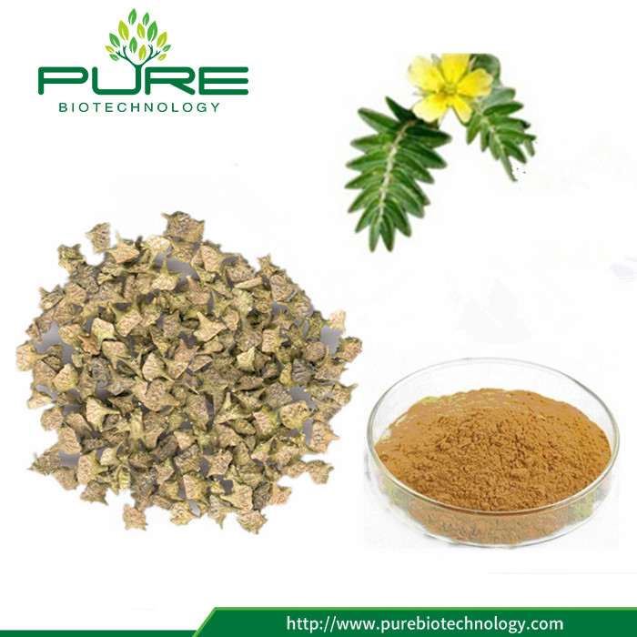 Low Price 100% Natural Tribulus Fruit Powder (2)