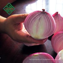 precio de las cebollas frescas chinas