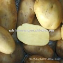 fresh holland potato