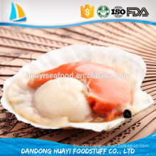 top priority frozen fresh half shell bay scallop export from china