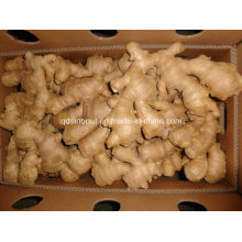 Super Quality Chinese Air Dry Ginger