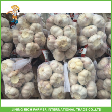 Kleine Verpackung Neue Ernte Chinesische frische natürliche Knoblauch