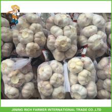 Embalagem pequena New Crop Chinese Fresh Natural Garlic