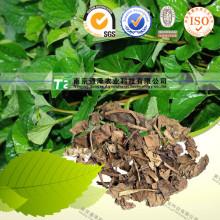 Natural Herbal Medicine Houttuynia Cordata