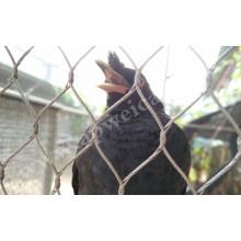 Filet de zoo / filet d'oiseau d'acier inoxydable / maille de volière