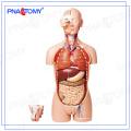 PNT-0300 85cm 27parts human torso model,open back,dual-sex