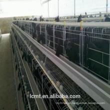 Equipamento de gaiola de galinhas totalmente automatizado para fazendas de gado ao redor do mundo