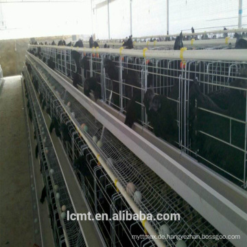 Vollautomatische Hühnerkäfigausrüstung für Tierhaltungsbetriebe auf der ganzen Welt