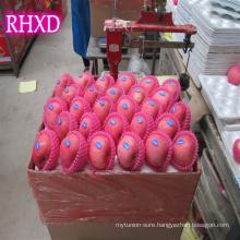 best price apple Fuji apple origin China