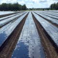 Agriculture White and Black Mulch Film