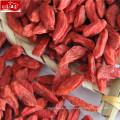 Neue Ernte Großhandel pflanzliche Beeren Goji