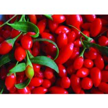 Ningxia Wild Goji Berry, Best Selling China Dried Herbal Fruit Goji Berry Tea in Bulk
