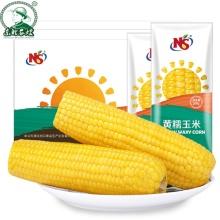 épis de maïs doux à vendre