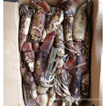 Frozen Indian Squid Whole Round For Sale 1-4kg from Indian Ocean