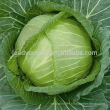 C09 Xialian maturité précoce f1 hybride graines de chou d'été