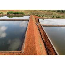 Acuicultura piscicultura jaulas red flotante