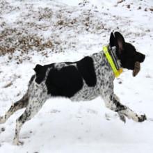 Caça impermeável do treinamento do colar do Beeper do cão com 8 modos 4 tipos de som