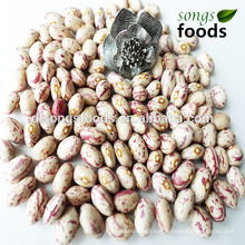 Chinese Kidney Beans, Many Kinds of Beans