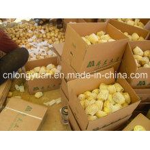Shandong Origem Batata Fresca Nova Temporada
