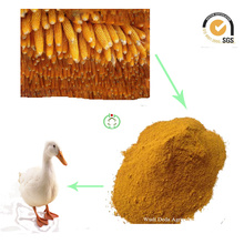Repas de protéines de gluten de maïs Nourriture animale