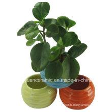 Forme ronde en forme de petit pot en céramique pour les fleurs en pleine croissance