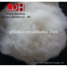 38mm dehaired and carded raw cashmere wool fiber