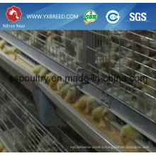Long Life Galvanized H Type Rearing Chicken Cage