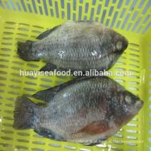 Preço baixo para o peixe preto da alta qualidade do tilapia