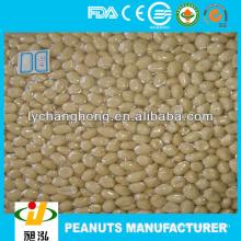 Erdnuss-Hersteller / blanchierte geröstete Erdnüsse in China