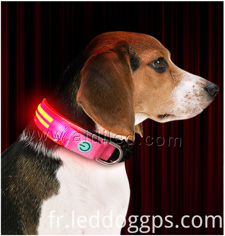 Best Led Collars For Dogs