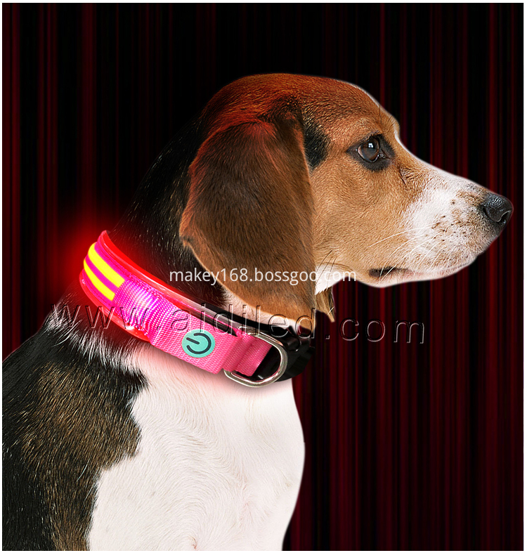 Nighttime Dog Collar