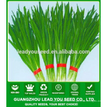 NLE01 Ecy Quality leek chive seed supplier