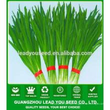 Fornecedor da semente do centeio do alho-porro da qualidade de NLE01 Ecy
