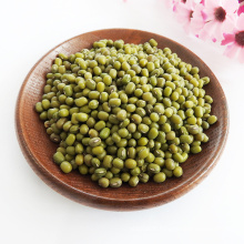 Natural  Price For Green Mung Beans Seed Maker For Sale Chinese Green Mung Beans