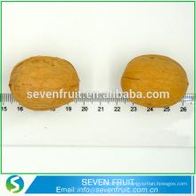 Noix de noix naturelle noix de noix de noix de noix noyées en coque GRADE A NUTS à vendre