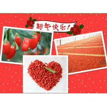 Fruta Seca ISO 9001 - Goji Berry