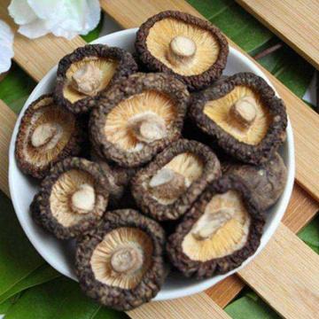 Log Special getrockneter Shiitake-Pilz