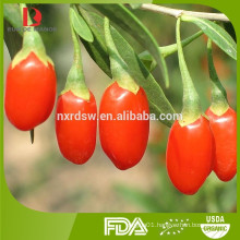 2016harvest wholesale high quality organic Chinese wolfberries/goji berries from China