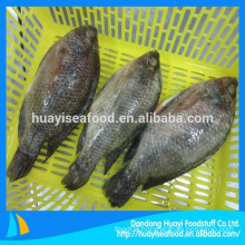 land frozen tilapia 800g+ whole round on sale