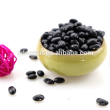 High quality black bean , black bean with green kernel , black bean price for sale