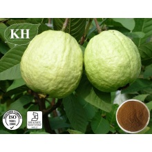 Factory Supply Guava Leaf Extract, Psidium Guajava